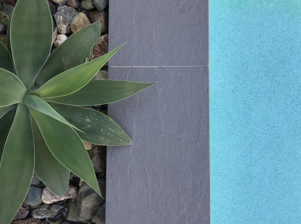 Plant_coping_water.jpg