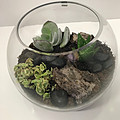 Succulentfishbowl-2.jpg