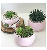 Sweet Succulent Bowl