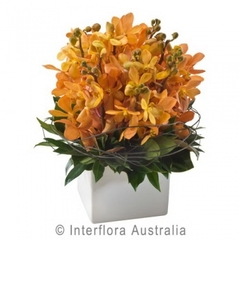 Orange Orchids in a Ceramic Pot