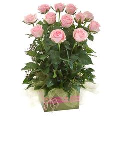 pink%2012%20rose%20box%20arr.jpg