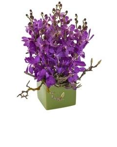 purple%20orchids.jpg