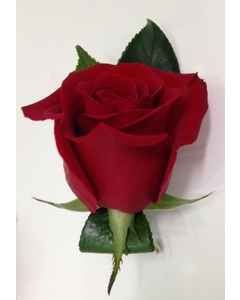 red%20rose%20buttonhole%20(2).JPG