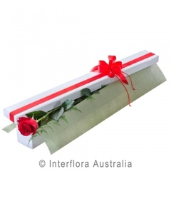 Single Rose Presentation Box