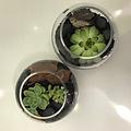 smallsucculentfishbowl-2.jpg