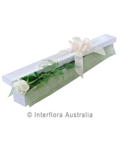 Single white rose presentation box