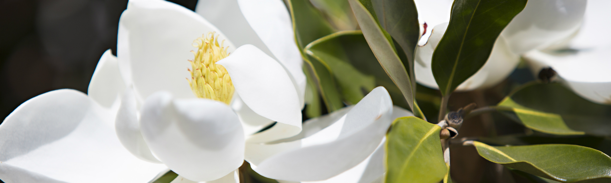 Arborwest_flower