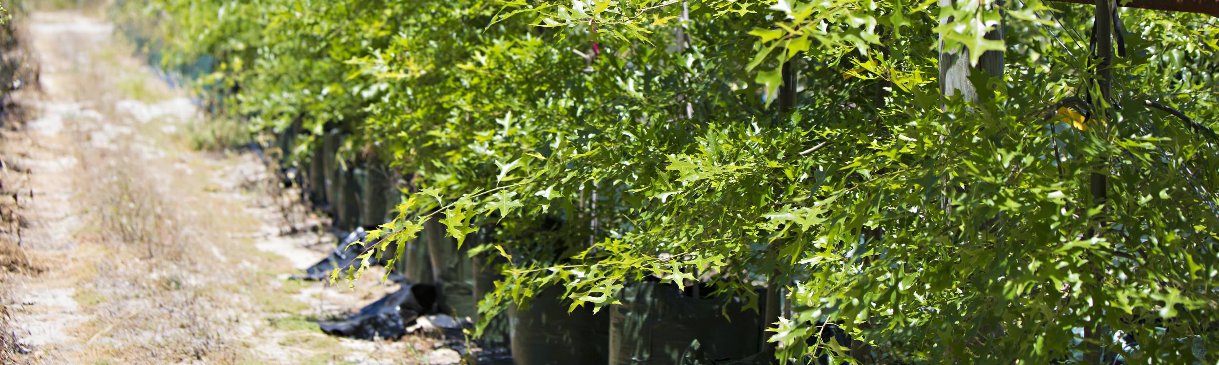 Arborwesttrees_6