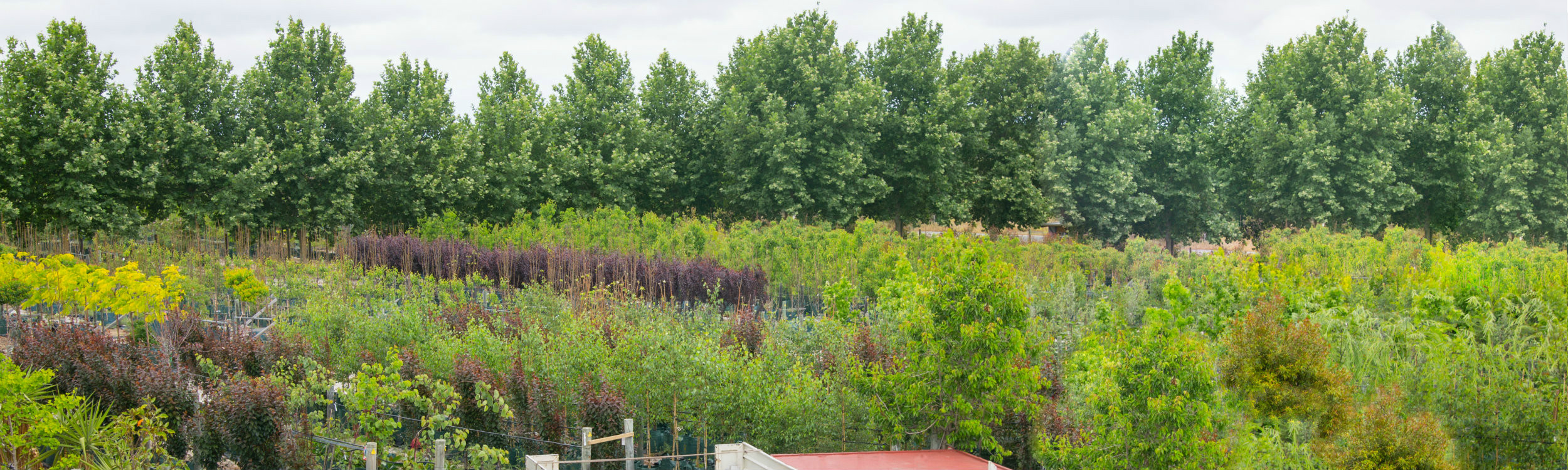 Arborwesttreefarm14