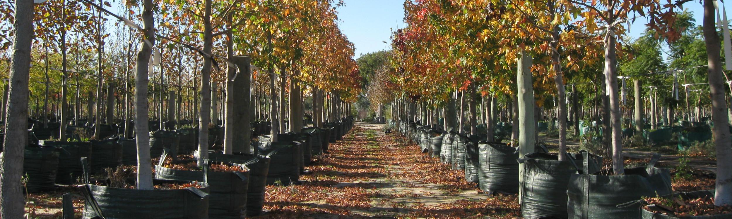 Arborwesttrees_12