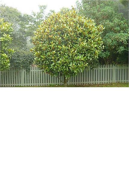 magnoliaexmouth-1.jpg