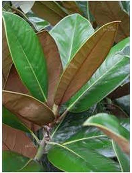 magnoliaexmouth-3.jpg