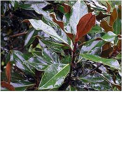 magnoliakayparris-2.jpg