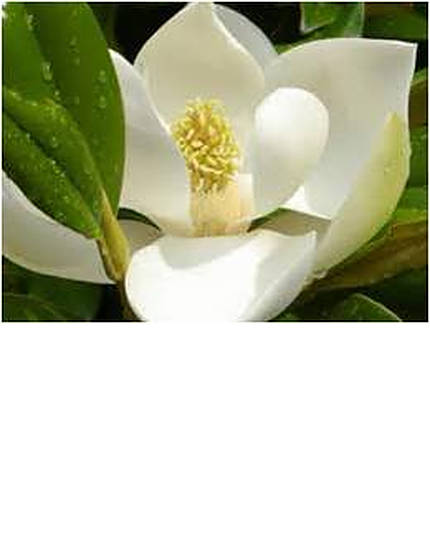 magnoliakayparris-3.jpg