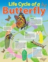 Life Cycle of a Butterfly Educational Chart