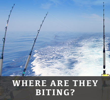 where-are-they-biting-text.jpg