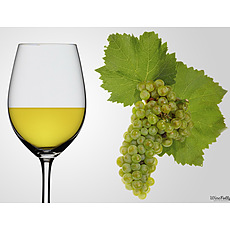 Chardonnay image - click to shop