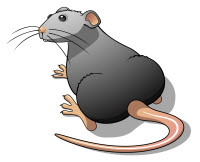 Rat and Mice Control is something we do really well at Lawon Environmental Pest Solutions