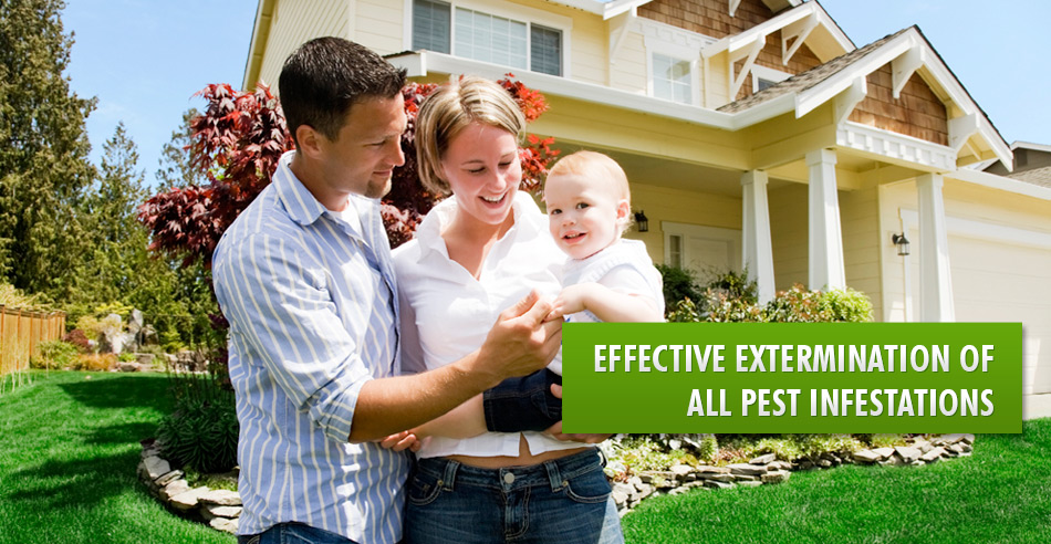 Call Lawson pest solutions 0426 288 822