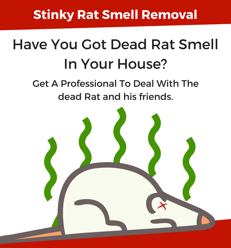 Stinky Dead Rat Removal Stinky Rodents Removed Across Perth