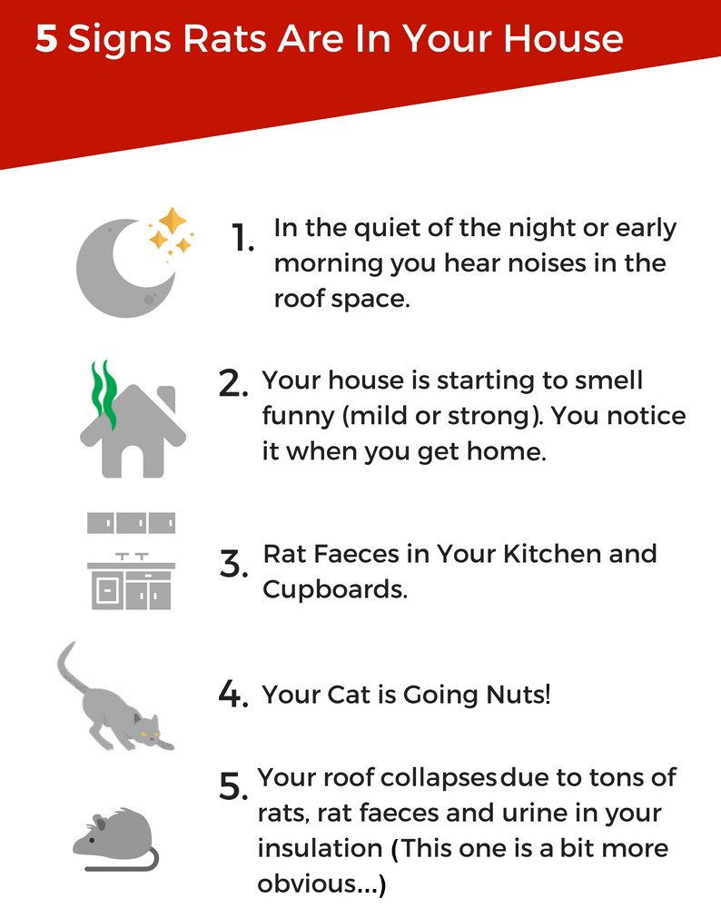5 Signs Rats are in Your Rossmoyne Roof