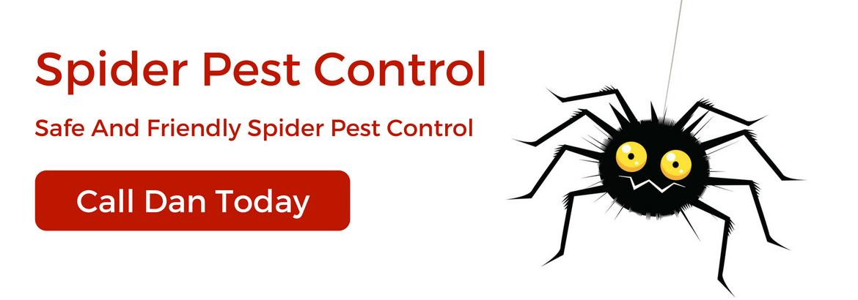 mtspestcontrol spiders-pest-control6.jpg