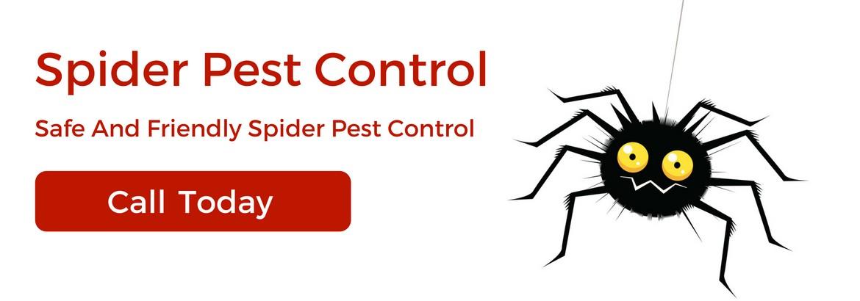 spiders-pest-control6-2.jpg