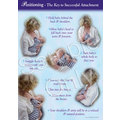 Wall Poster: Positioning - The Key to Successful Breastfeeding (1 Copy)
