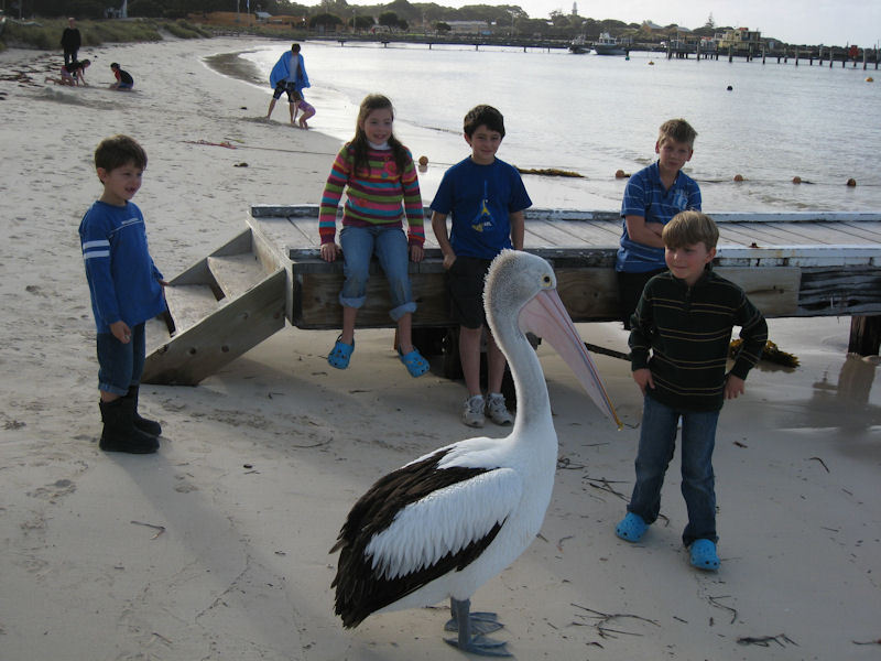 Photograph of Talking to Mr Pelican at Rotto