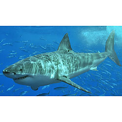 Shark Protection image - click to shop